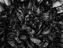 Παλαιά νεκρά λουλούδια Στοκ Φωτογραφίες