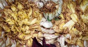 Παλαιά νεκρά λουλούδια Στοκ εικόνες με δικαίωμα ελεύθερης χρήσης