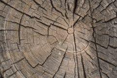 Παλαιά ξεπερασμένα δαχτυλίδια τελών κούτσουρων outbuilding καμπινών κούτσουρων Στοκ φωτογραφίες με δικαίωμα ελεύθερης χρήσης