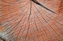 Παλαιά ξηρά ξύλινη σύσταση Στοκ Εικόνα