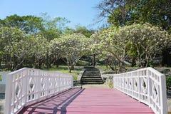 παλαιά ξύλινη εκλεκτής ποιότητας γέφυρα στον κήπο Koh του Si Chang Στοκ Εικόνες