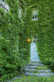 Παλαιά ξύλινη πόρτα με τα φύλλα Στοκ φωτογραφίες με δικαίωμα ελεύθερης χρήσης