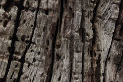 Παλαιά ξύλινη σύσταση Στοκ Φωτογραφία