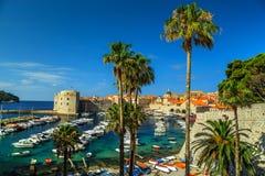 Παλαιά πόλη του πανοράματος Dubrovnik με τους φοίνικες, Κροατία, Ευρώπη Στοκ εικόνα με δικαίωμα ελεύθερης χρήσης