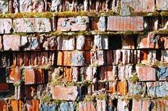 Παλαιά ραγισμένη πλινθοδομή φιαγμένη από τούβλινο και που καλύπτεται εν μέρει με το πράσινο βρύο - φυσικό υπόβαθρο Στοκ Εικόνες