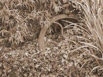 Παλαιά ρόδα στη σέπια που βρίσκεται στον κήπο Στοκ φωτογραφίες με δικαίωμα ελεύθερης χρήσης
