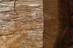 Παλαιά δρύινη διασπασμένη υψηλή ανακούφιση κούτσουρων Στοκ φωτογραφία με δικαίωμα ελεύθερης χρήσης