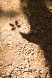 Παλαιά δρύινη σκιά δέντρων Στοκ εικόνα με δικαίωμα ελεύθερης χρήσης