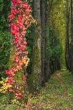 Παλαιά σπίτια σε ένα χωριό στις Άλπεις Στοκ φωτογραφίες με δικαίωμα ελεύθερης χρήσης