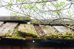 παλαιά στέγη ξύλινη στοκ εικόνα με δικαίωμα ελεύθερης χρήσης