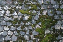 Παλαιά στέγη πετρών που καλύπτεται με το βρύο Στοκ εικόνες με δικαίωμα ελεύθερης χρήσης