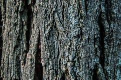 Παλαιά σύσταση δέντρων Στοκ Εικόνες