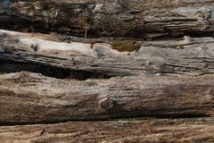 Παλαιά σύσταση κορμών δέντρων στοκ εικόνες
