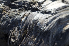 Παλαιά σύσταση Driftwood Grunge Στοκ Φωτογραφία