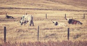 Παλαιά ταινία αναδρομικό τυποποιημένο Τέξας Longhorns Στοκ φωτογραφία με δικαίωμα ελεύθερης χρήσης