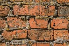 Παλαιά τούβλινη σύσταση τοίχων με τις ρωγμές και το βρύο Στοκ Φωτογραφία