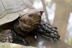 Παλαιά χελώνα στο ζωολογικό κήπο Στοκ φωτογραφίες με δικαίωμα ελεύθερης χρήσης