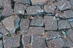 Παλαιά cobbles με τη χλόη Στοκ φωτογραφία με δικαίωμα ελεύθερης χρήσης