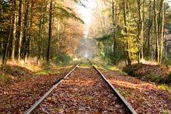 Παλαιές διαδρομές σιδηροδρόμου στο πυκνό δάσος σκληρού ξύλου Στοκ εικόνα με δικαίωμα ελεύθερης χρήσης