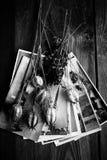 Παλαιές φωτογραφίες, μια κάμερα και ξηρά λουλούδια μαύρο λευκό Στοκ Εικόνες