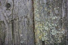 Παλαιοί γκρίζοι πίνακες με το πράσινες βρύο και τη λειχήνα Στοκ Εικόνες
