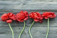 Παλαιοί ξύλινοι πίνακες με τα κόκκινα λουλούδια Στοκ Φωτογραφία