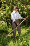 Παλαιός αγρότης που χρησιμοποιεί το δρεπάνι για να κόψει τη χλόη Στοκ Φωτογραφία