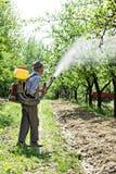 Παλαιός αγρότης που ψεκάζει τα δέντρα Στοκ Εικόνες