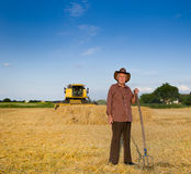 Παλαιός αγρότης στη συγκομιδή Στοκ Φωτογραφίες
