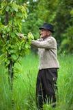 Παλαιός αγρότης στον οπωρώνα του Στοκ εικόνα με δικαίωμα ελεύθερης χρήσης