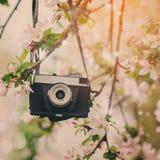 Παλαιός αναδρομικός η κάμερα κρεμά σε ένα Apple-δέντρο στην ηλιόλουστη ημέρα άνοιξη Στοκ Εικόνα
