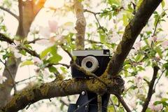 Παλαιός αναδρομικός η κάμερα κρεμά σε ένα Apple-δέντρο στην ηλιόλουστη ημέρα άνοιξη Στοκ Εικόνες
