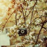 Παλαιός αναδρομικός η κάμερα κρεμά σε ένα Apple-δέντρο στην ηλιόλουστη ημέρα άνοιξη Στοκ εικόνες με δικαίωμα ελεύθερης χρήσης