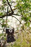 Παλαιός αναδρομικός η κάμερα κρεμά σε ένα Apple-δέντρο στην ηλιόλουστη ημέρα άνοιξη Στοκ φωτογραφία με δικαίωμα ελεύθερης χρήσης