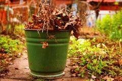 Παλαιός βγάζει φύλλα και διακλαδίζεται στο πράσινο δοχείο σιδήρου στο spri χωρών Στοκ Φωτογραφίες