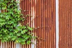 Παλαιός γαλβανισμένος τοίχος σιδήρου στοκ εικόνες