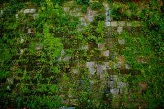 Παλαιός γκρίζος τοίχος πετρών με την πράσινη σύσταση βρύου Στοκ φωτογραφία με δικαίωμα ελεύθερης χρήσης