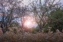 Παλαιός κήπος μήλων το φθινόπωρο στο ηλιοβασίλεμα Στοκ εικόνα με δικαίωμα ελεύθερης χρήσης