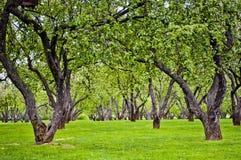 Παλαιός κήπος μήλων Στοκ φωτογραφία με δικαίωμα ελεύθερης χρήσης