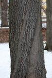 παλαιός κορμός δέντρων Στοκ φωτογραφίες με δικαίωμα ελεύθερης χρήσης