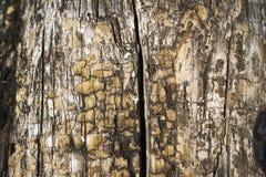 Παλαιός μίσχος δέντρων Στοκ εικόνες με δικαίωμα ελεύθερης χρήσης