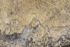 Παλαιός ξύλινος μίσχος με την αρμονική δομή στοκ εικόνες