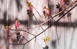 Παλαιός ξύλινος τοίχος με τους κλάδους δέντρων σύσταση Υπόβαθρο στοκ φωτογραφίες
