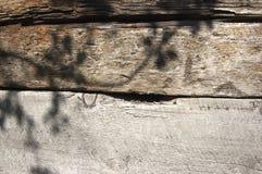 Παλαιός ξύλινος τοίχος τεμαχίων με τη σκιά του κλάδου δέντρων Στοκ εικόνες με δικαίωμα ελεύθερης χρήσης