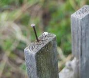 Παλαιός ξύλινος φράκτης και ένα σκουριασμένο καρφί που κολλά έξω Στοκ Εικόνες