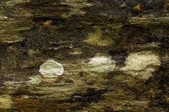 Παλαιός ξύλινος φλοιός δέντρων Στοκ Φωτογραφίες