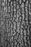 Παλαιός ξύλινος φλοιός Στοκ Φωτογραφία
