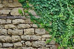 Παλαιός πέτρινος τοίχος με τις εγκαταστάσεις στοκ φωτογραφία με δικαίωμα ελεύθερης χρήσης