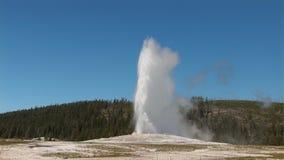 Παλαιός πιστός σε Yellowstone απόθεμα βίντεο