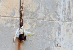 Παλαιός σκουριασμένος σωλήνας βροχής στον γκρίζο εκλεκτής ποιότητας τοίχο στοκ φωτογραφία